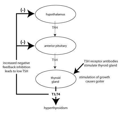 Pathology Outlines Thyroid Function Panel