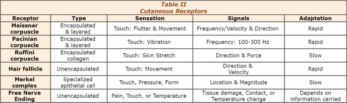 two point threshold The approximate size of the receptive fields serving light touch can be measured by the two-point touch threshold test in this procedure, the two points of a.